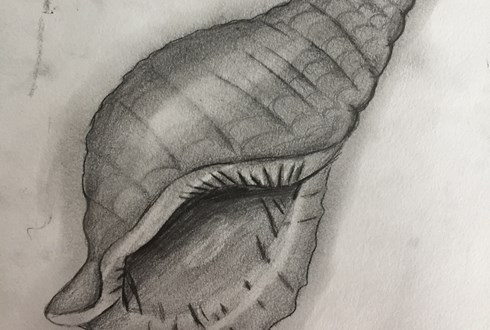 Shell drawings - Year 9